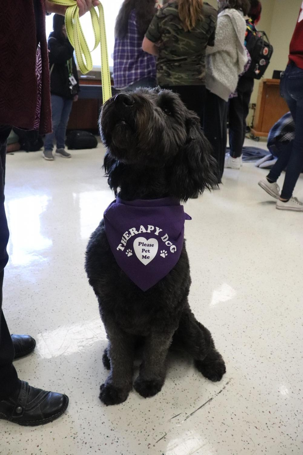 A Therapy dog sits and waits patiently to be pet.